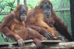 Zoo_Dortmund_100715_IMG_6816