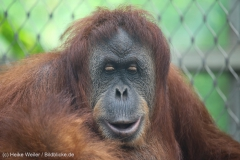 Zoo_Dortmund_100715_IMG_6823