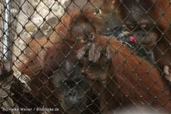 Zoo_Dortmund_190714_copy_Heike_Weiler_IMG_1979