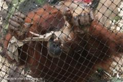 Zoo_Dortmund_190714_copy_Heike_Weiler_IMG_1985