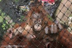 Zoo_Dortmund_190714_copy_Heike_Weiler_IMG_1995