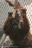 Zoo_Dortmund_190714_copy_Heike_Weiler_IMG_2004