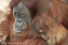 Zoo_Dortmund_190714_copy_Heike_Weiler_IMG_2063