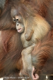 Zoo_Dortmund_190714_copy_Heike_Weiler_IMG_2071