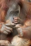 Zoo_Dortmund_190714_copy_Heike_Weiler_IMG_2087