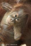 Zoo_Dortmund_190714_copy_Heike_Weiler_IMG_2094