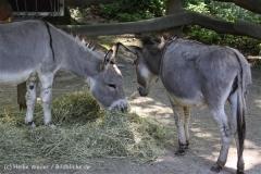Zoo_Dortmund_190714_copy_Heike_Weiler_IMG_2112