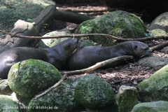 Zoo_Dortmund_190714_copy_Heike_Weiler_IMG_2210