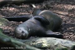 Zoo_Dortmund_190714_copy_Heike_Weiler_IMG_2217