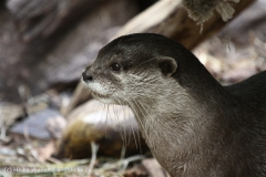 Zoo_Dortmund_190714_copy_Heike_Weiler_IMG_2264