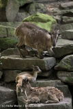 Zoo_Dortmund_190714_copy_Heike_Weiler_IMG_2325