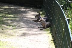 Zoo_Dortmund_190714_copy_Heike_Weiler_IMG_2344
