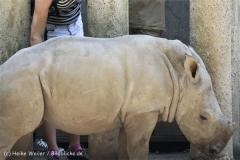 Zoo_Dortmund_190714_copy_Heike_Weiler_IMG_2349