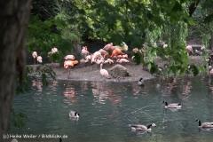 Zoo Dortmund 310711- IMG_3620