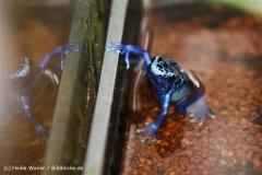 Zoo Dortmund 310711- IMG_3665