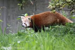 Zoo Dortmund 310711- IMG_3674