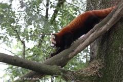 Zoo Dortmund 310711- IMG_3687