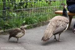Zoo Dortmund 310711- IMG_3723