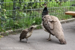 Zoo Dortmund 310711- IMG_3724