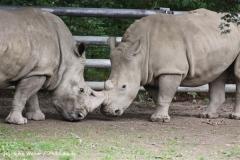 Zoo Dortmund 310711- IMG_3776