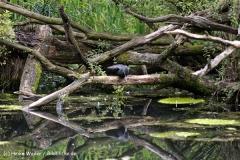 Zoo Dortmund 310711- IMG_3793