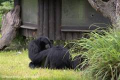 Zoo Dortmund 310711- IMG_3818