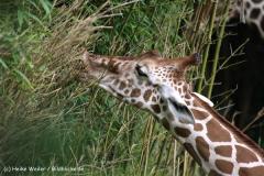 Zoo Duisburg 210810 - IMG_0448
