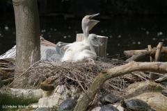 Zoo Duisburg 210810 - IMG_0461