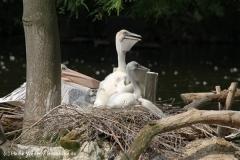 Zoo Duisburg 210810 - IMG_0464