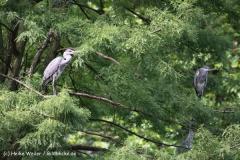Zoo Duisburg 210810 - IMG_0476