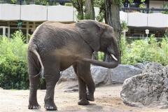 Zoo Duisburg 210810 - IMG_0480