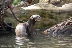 Zoo Duisburg 210810 - IMG_0494