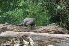 Zoo Duisburg 210810 - IMG_0497