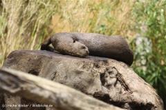 Zoo Duisburg 210810 - IMG_0523