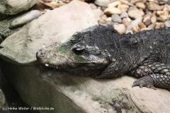 Zoo Duisburg 210810 - IMG_0528