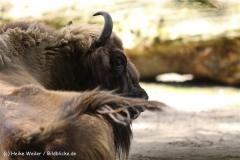 Zoo Duisburg 210810 - IMG_0623-2