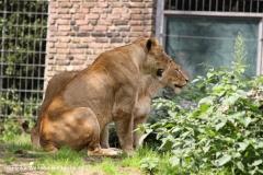 Zoo Duisburg 210810 - IMG_0641