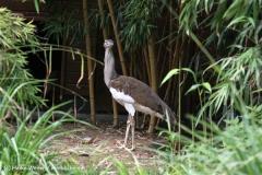 Zoo Duisburg 210810 - IMG_0749