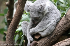 Zoo Duisburg 210810 - IMG_0782