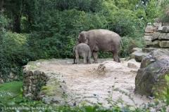 Zoo_Emmen_070915_IMG_7428_0118