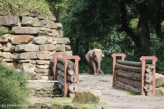 Zoo_Emmen_070915_IMG_7429
