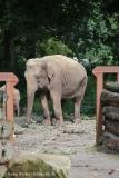 Zoo_Emmen_070915_IMG_7431