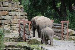 Zoo_Emmen_070915_IMG_7434