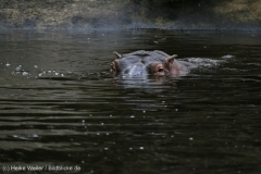 Zoo_Emmen_070915_IMG_7447