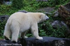 Zoo_Emmen_070915_IMG_7491