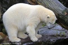 Zoo_Emmen_070915_IMG_7529