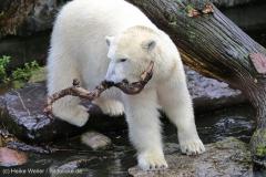 Zoo_Emmen_070915_IMG_7537