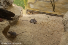 Zoo_Frankfurt_010812_IMG_0918