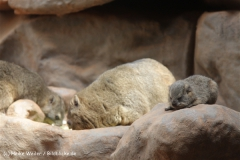 Zoo_Frankfurt_010812_IMG_0980
