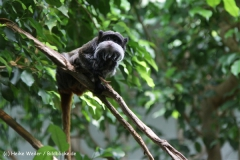 Zoo_Frankfurt_010812_IMG_0987